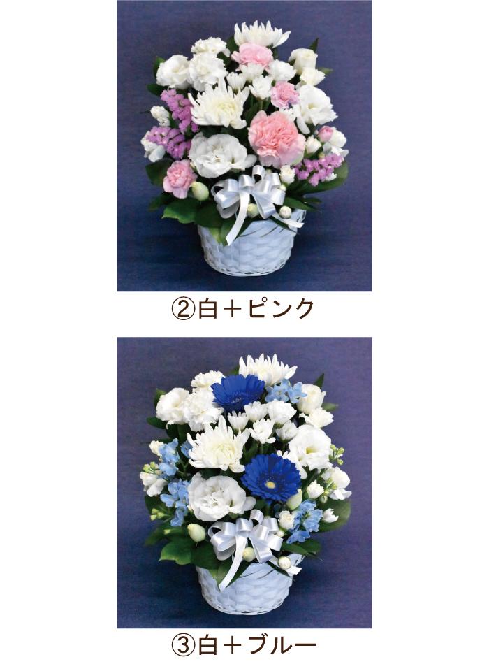 白ピンク、白ブルーから選択