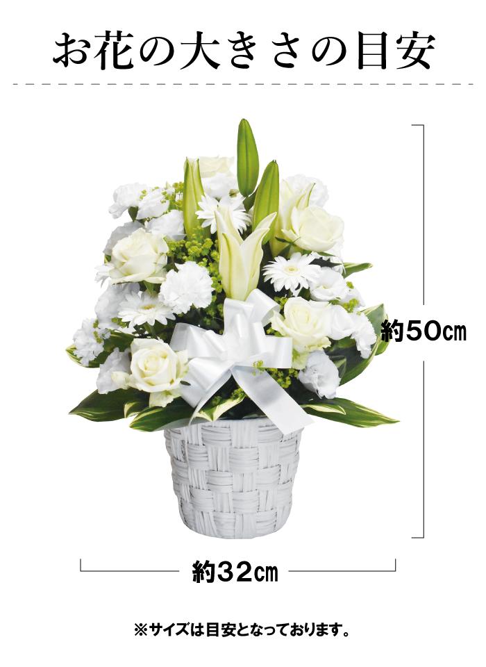 花の大きさサイズの目安