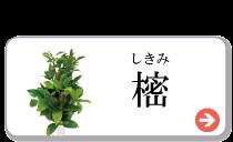 obon-4